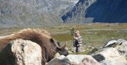 Musk-ox-hunting-blog