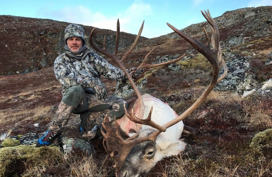 Bow hunting caribou in Greenland