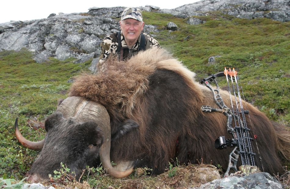 Bowhunting muskox in Greenland, Boone and Crockett