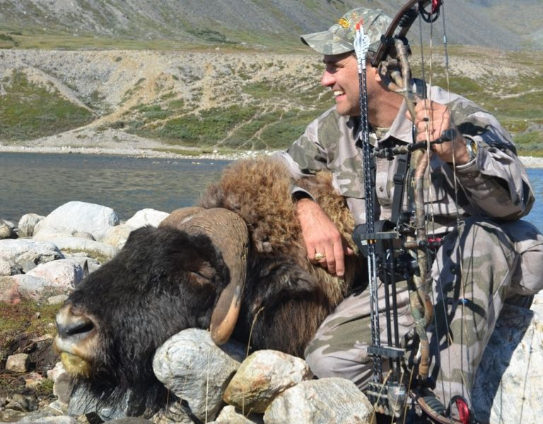 Muskox hunting in Greenland