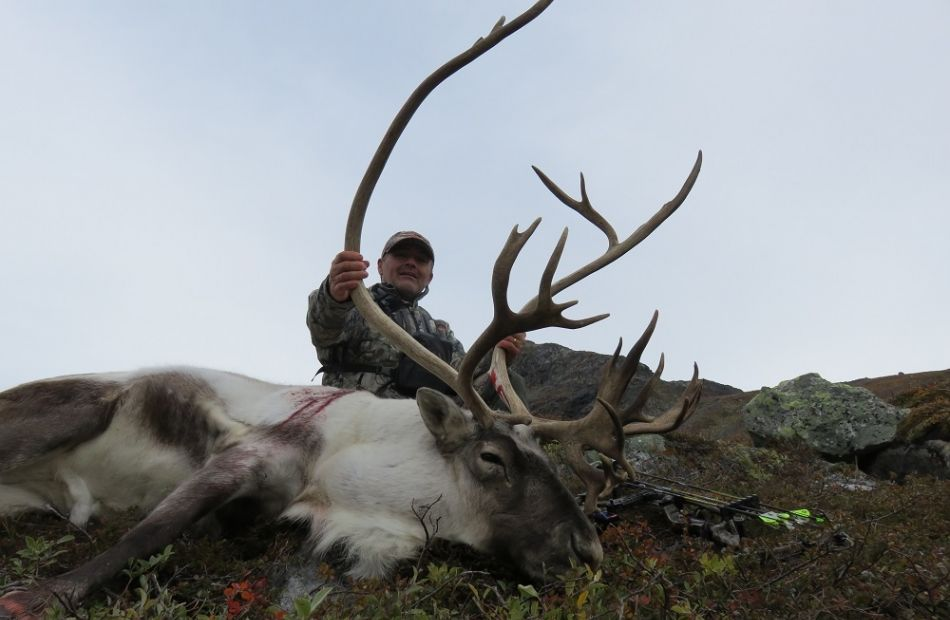 bowhuntinggreenland caribou David Perrion